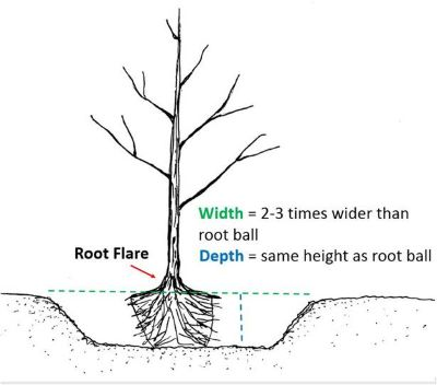 correct tree planting diagram